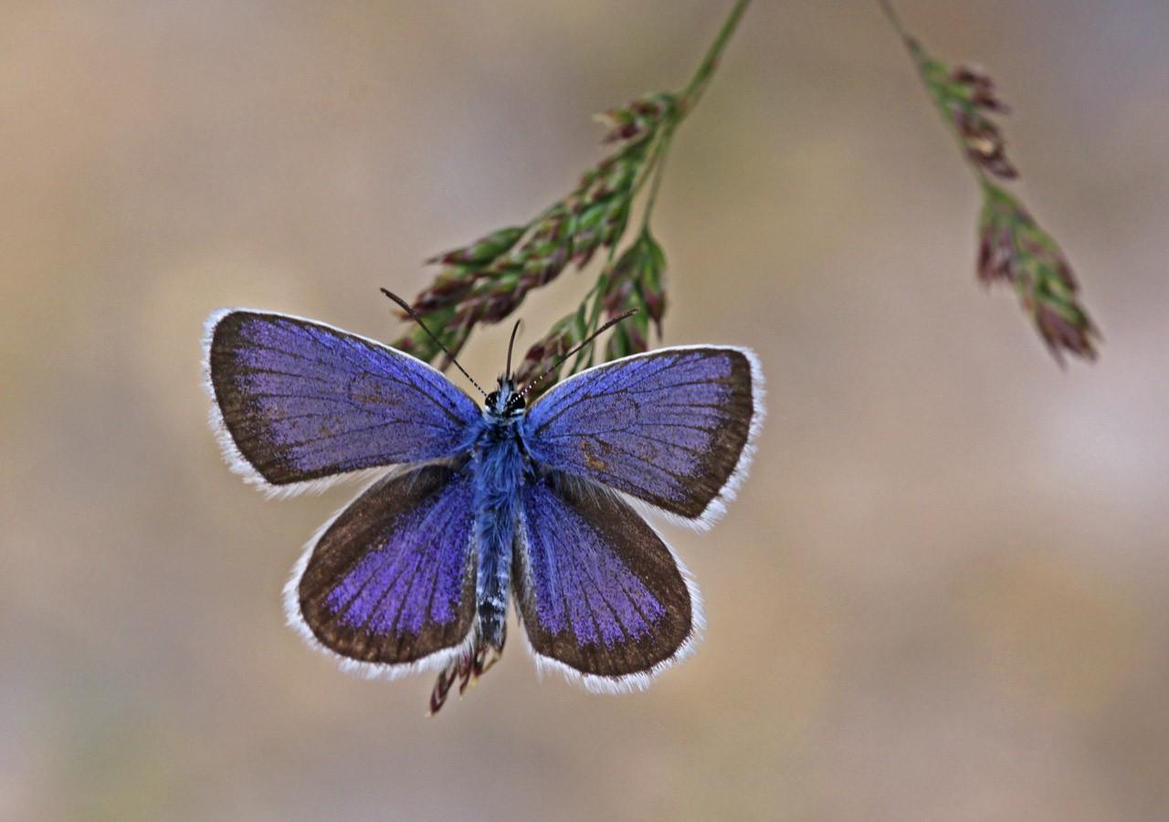 Gartentipp Schmetterlingsspirale