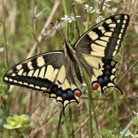 Offener Schmetterlingsgarten