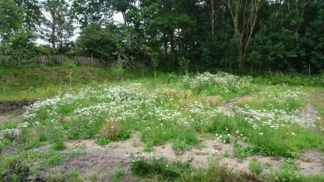 Mein Naturgarten - seit 2015 im Entstehen 10.03.2017