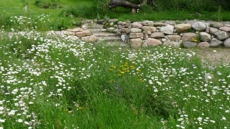 Mein Naturgarten - seit 2015 im Entstehen 11.03.2017