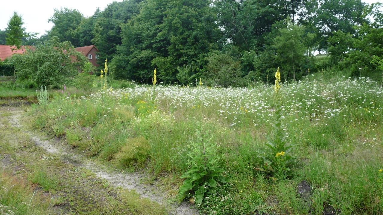Mein Schmetterlingsgarten - Fotos zum BLOG 15.03.2017