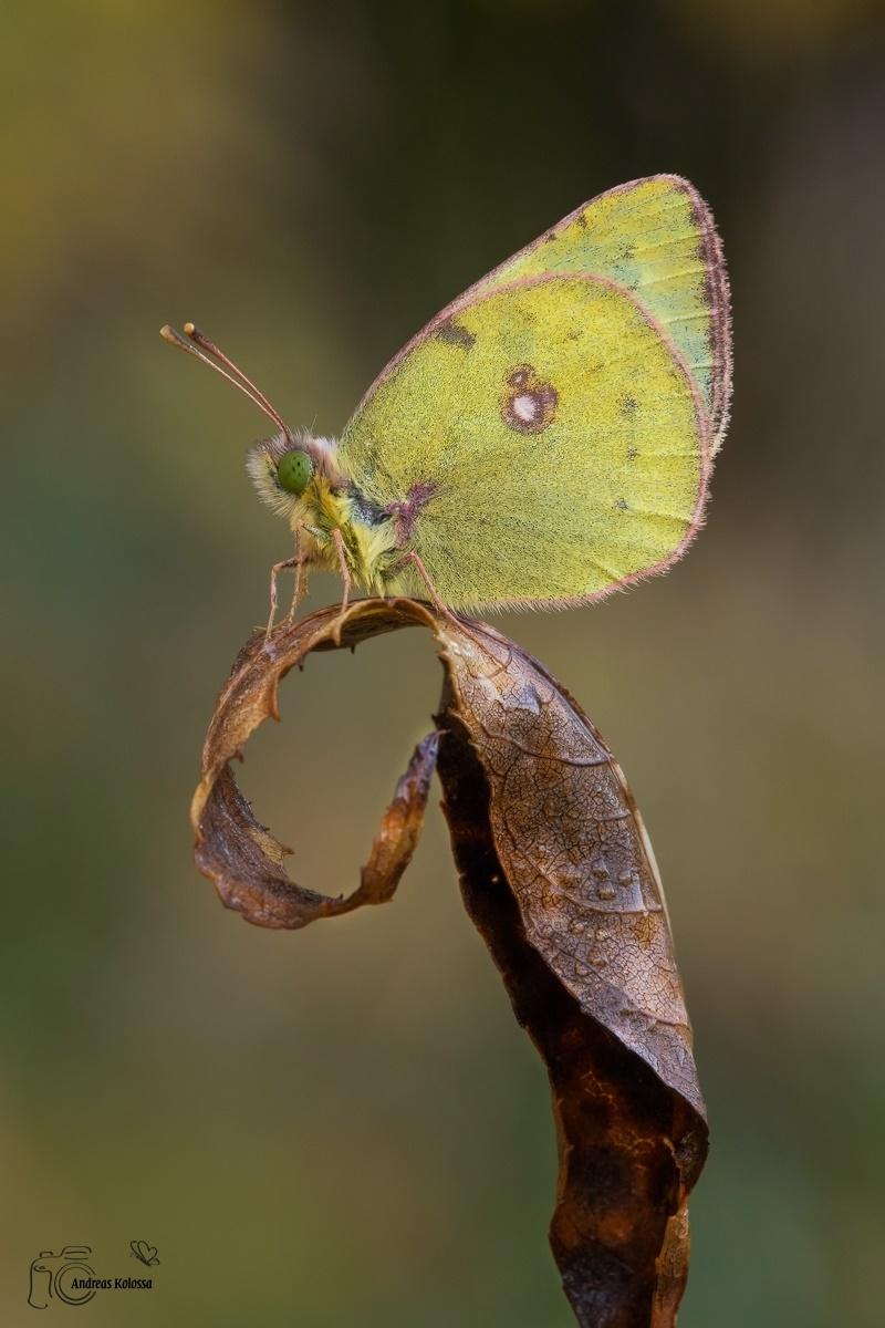 Schmetterlinge-Tagfalter 01.11.2017