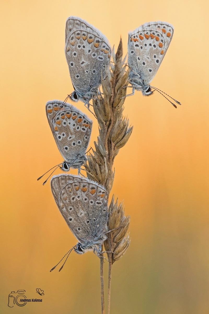 Schmetterlinge-Tagfalter 02.11.2017