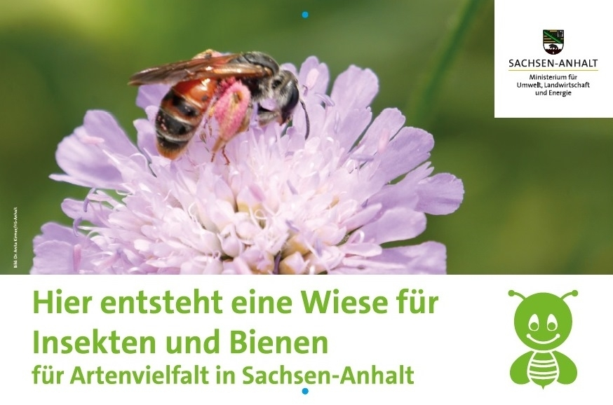 Insektenwiese Aktionsschild